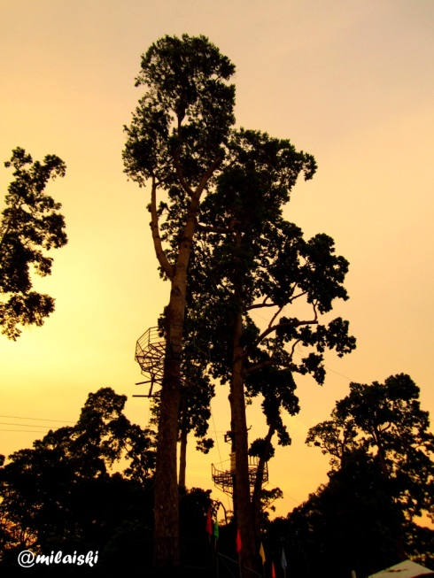 Silhouette of trees in Subic.